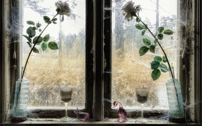 Картинка цветы, розы, окно
