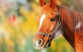 Картинка морда, фон, конь, лошадь