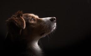 Обои фон, дом, взгляд, собака