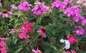 Картинка Цветы, Природа, Цветок, Растение, Флора