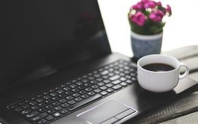 Картинка цветок, кофе, ноутбук
