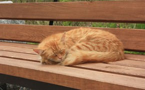 Картинка спит, на лавочке, рыжая кошка