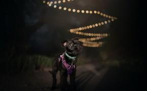 Картинка ночь, друг, собака