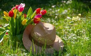 Картинка Цветы, Тюльпаны, Букет, Шляпа