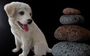 Картинка камни, собака, щенок