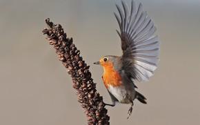 Картинка фон, птица, крыло