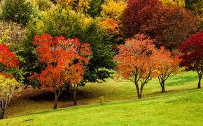 Картинка осень, трава, цвета, деревья, парк, склон, Австралия, Mount Lofty Botanic Garden