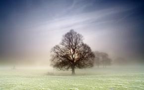 Картинка поле, природа, туман, дерево