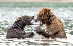 Картинка брызги, медведи, в воде
