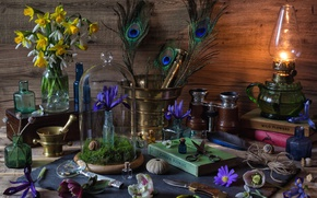 Картинка цветы, лампа, перья, ракушка, книга, бутылки, натюрморт, нарцисс, ступка, ирис, морозник
