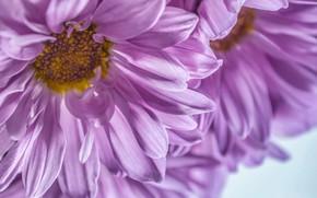 Картинка макро, цветы, by dashakern