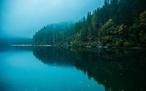 Картинка лес, небо, вода, отражения, деревья, природа, озеро, река