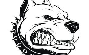 Обои арт, Pitbull, аватарка, Питбуль, angry dog, злой пес
