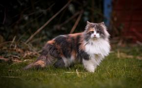 Картинка кошка, трава, кот, взгляд, ветки, котенок, поляна, весна, мордочка, двор, красавица, котёнок, пушистая, пятнистая, белая …