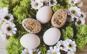 Картинка Цветы, Пасха, Яйца, Мох, Сено, Праздник