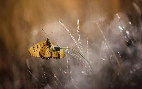Картинка цветок, макро, блики, бабочка, боке