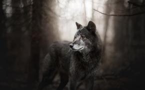 Картинка лес, собака, Bree