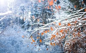 Картинка лес, листья, снег, деревья, ветки