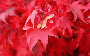 Картинка осень, листья, оранжевые