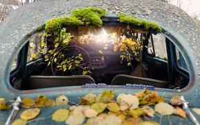 Картинка машина, листья, фон