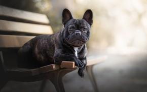 Картинка друг, собака, скамья