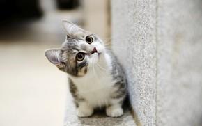 Картинка глаза, котенок, милый