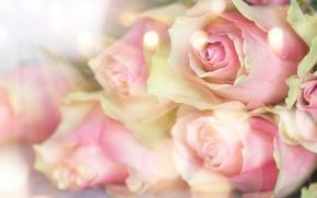 Картинка розы, бутоны, pink, flowers, romantic, roses, valentine`s day