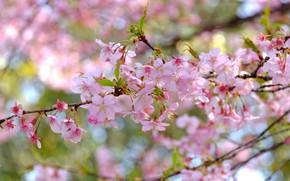 Картинка листья, ветка, цветки, цветущая веточка