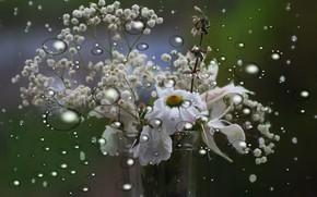 Картинка капли, цветы, фон