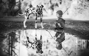 Картинка отражение, ребенок, собака, мальчик, лужа, Далматин, чёрно - белое фото