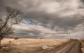 Обои дерево, дорога, поле