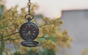 Картинка макро, ветки, часы