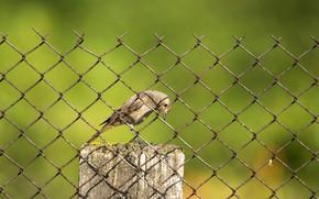 Картинка зелень, лето, желтый, птица, забор, размытие, клетка, рабица