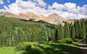 Картинка небо, горы, еловый лес