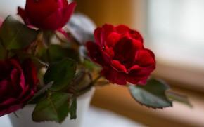 Картинка Макро, Роза, Цветок, Бутон