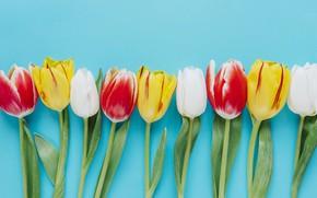 Картинка фон, Цветы, Тюльпаны