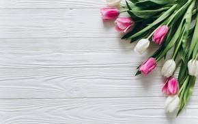 Картинка цветы, colorful, тюльпаны, розовые, white, белые, fresh, wood, pink, flowers, beautiful, tulips, spring, tender