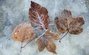 Картинка холод, зима, листья, лёд