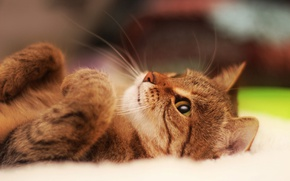 Обои котенок, лапки, мордочка, милый