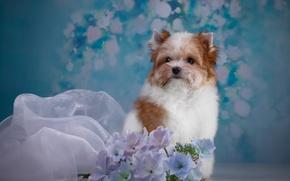 Картинка ткань, щенок, порода