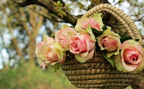 Картинка лето, листья, цветы, природа, фон, дерево, роза, розы, букет, ветка, лепестки, сад, нежные, розовые, корзинка, …