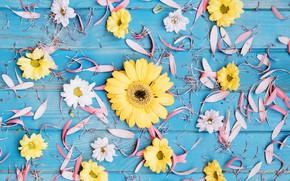 Картинка цветы, лепестки, хризантемы, гербера