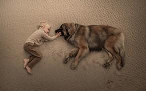 Обои собака, друзья, дружба, мальчик, песок