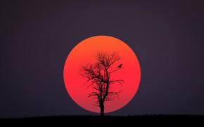 Обои red, black, bird, sun