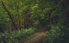 Картинка лес, деревья, Франция, тропинка