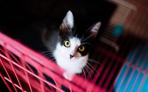 Картинка кошка, кот, взгляд, фон, черно-белый, темный, портрет, решетка, котёнок, желтые глаза, контрастно, смотрит в глаза