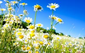 Обои весна, небо, солнце, поле, ромашки, spring, цветы