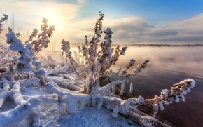 Картинка зима, снег, природа, озеро, травы, кусты