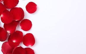 Картинка белый фон, Текстура, лепестки роз