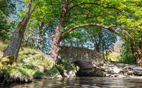 Картинка вода, деревья, мост
